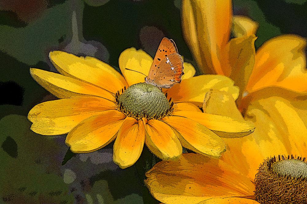 Fjäril oranga blommor