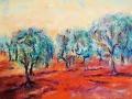 Olivträd, Olja