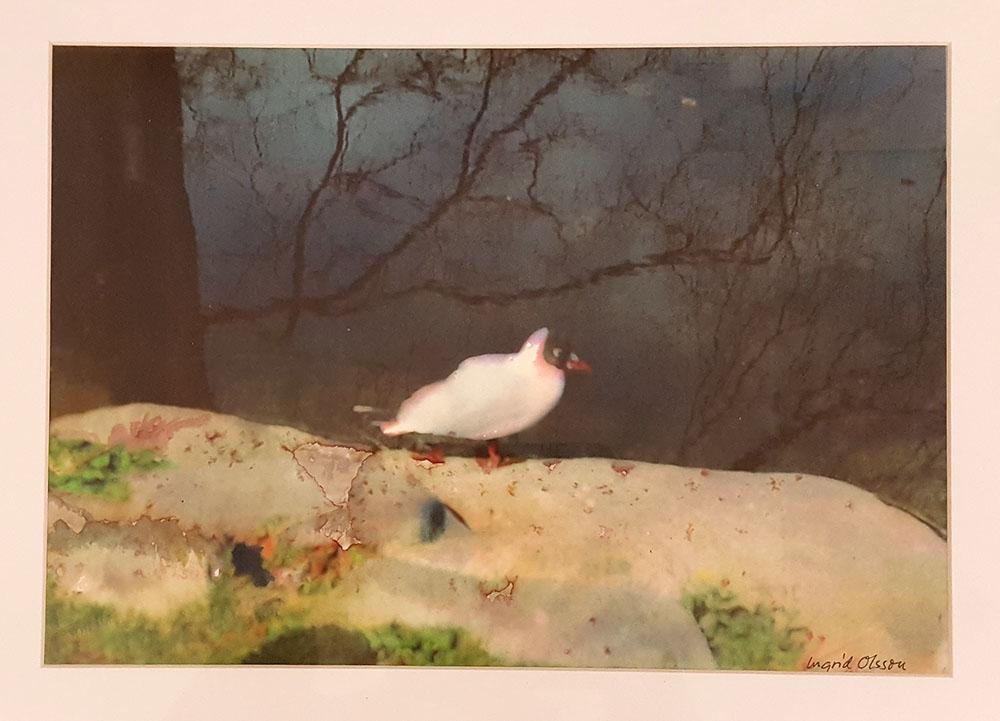 Fågel i Stadsparken, Blandteknik