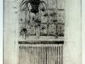 Ampellilja, torrnål